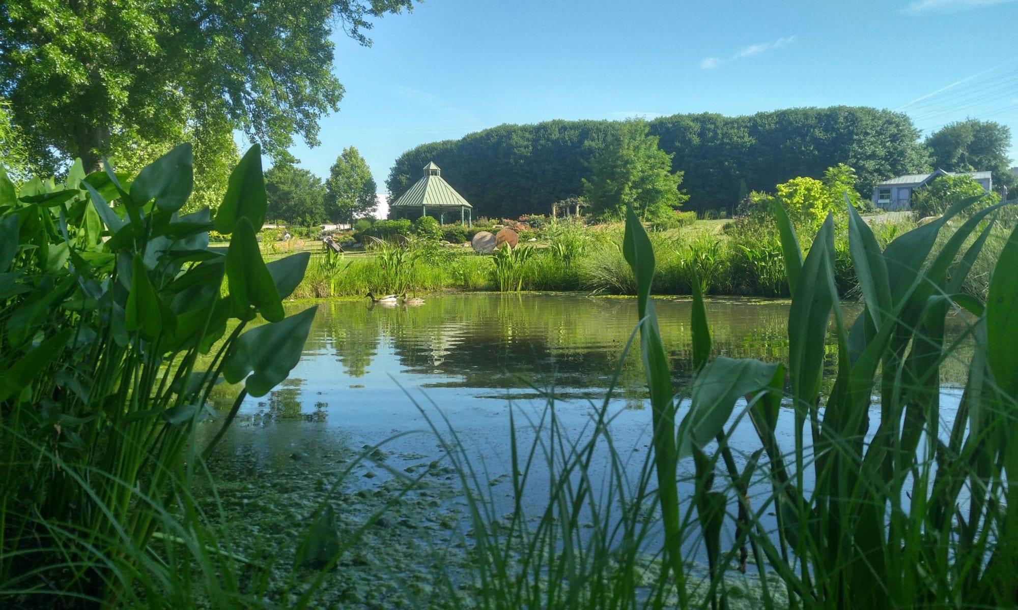 Wetland Plants for Your Backyard Habitat
